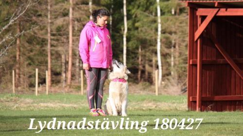 Lydnadstävling 180427